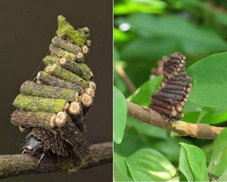 Rare Pics,  moth