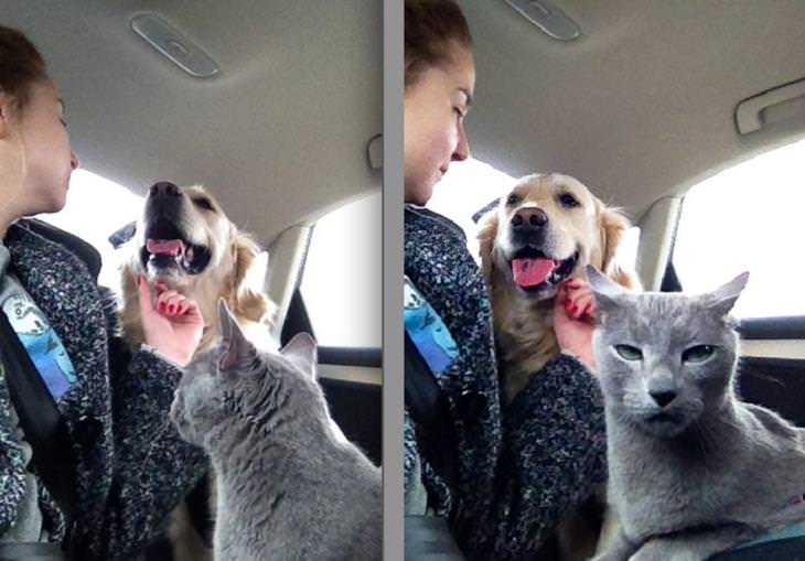 Cats and Dogs,