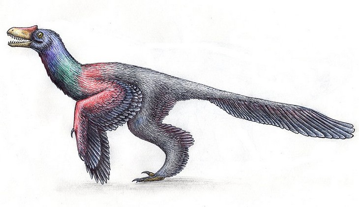10 Wrong 'Facts' You Probably Learned In School dinosaur bird