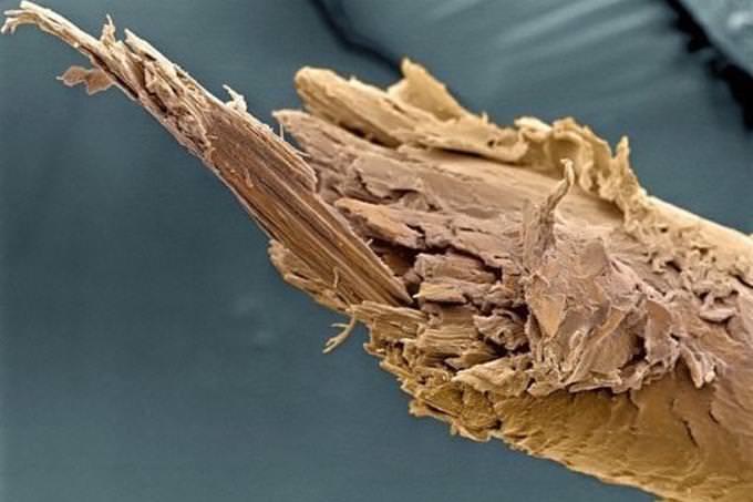 split end under microscope
