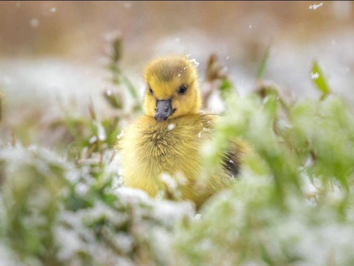 Ossi Saarinen Wildlife Photos 2020