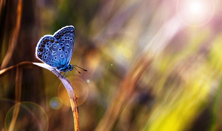 Spirit Animals, The Butterfly