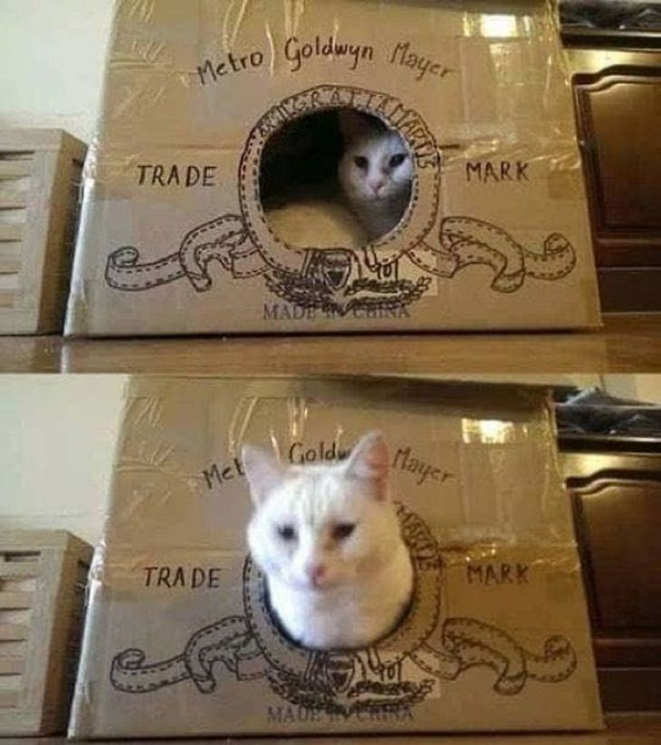 Homemade Cat Forts MGM logo