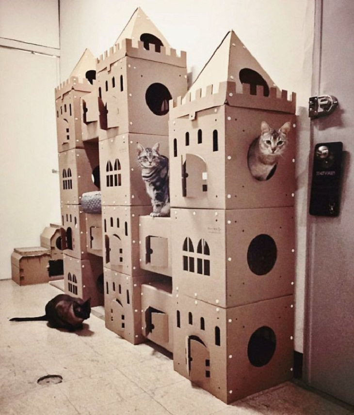 Homemade Cat Forts cat of thrones