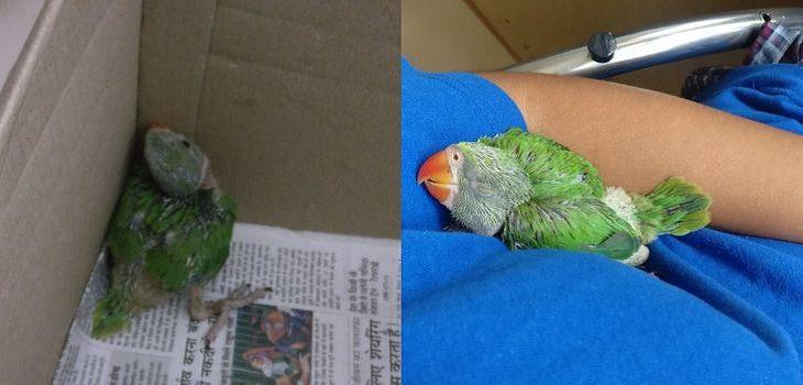 Relaxing Animals, baby parrot