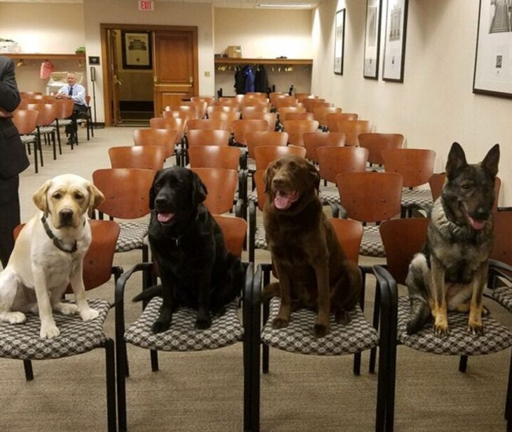 Dogs With Admirable Jobs detecting explosives