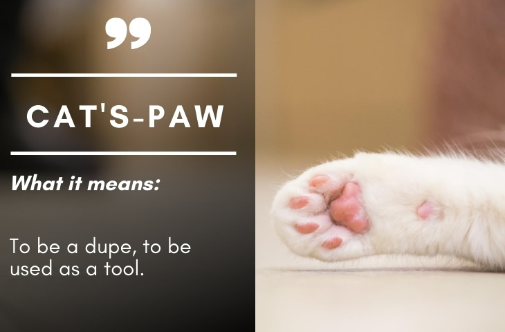 Colonial Era Terms Cat's Paw