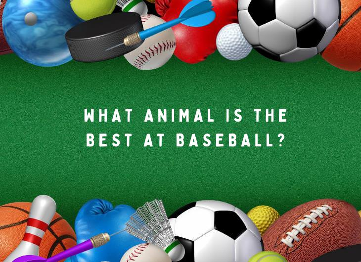 Fun Sports and Games Themed Riddles