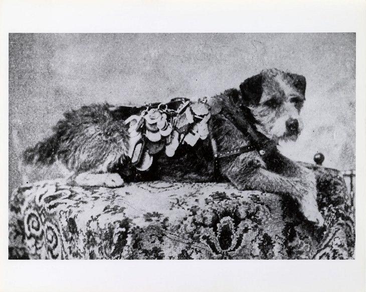 History's 5 Bravest Dogs, Owney