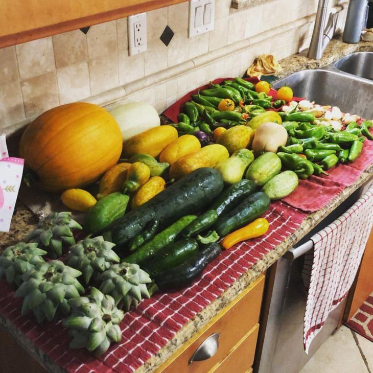 Gian Fruits and Veggies, harvest