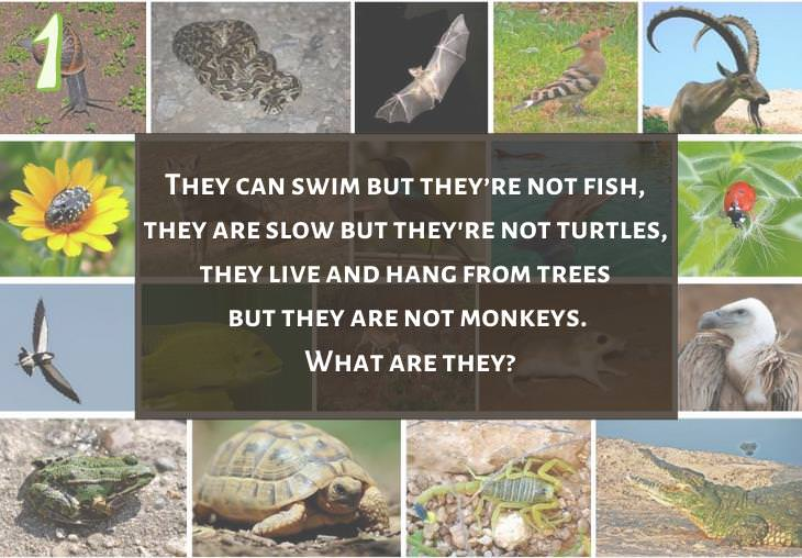 Clever and Fun Riddles About Different Types of Animals