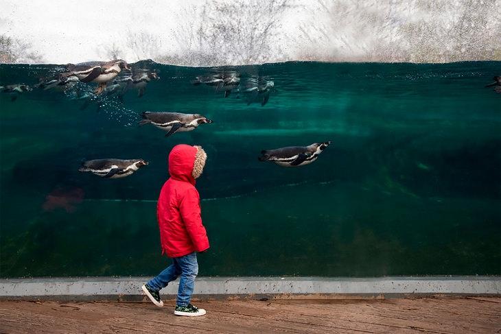 Award-Winning Photos from Zoos & Aquariums, penguin
