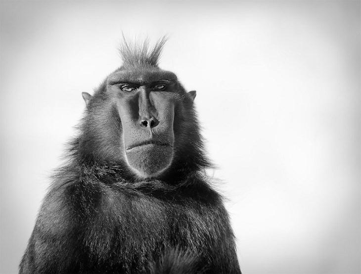 Award-Winning Photos from Zoos & Aquariums, Macaque