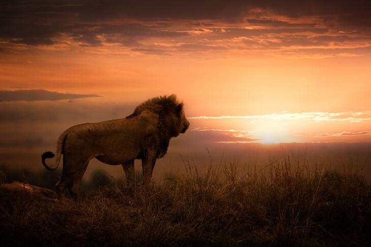 Wildlife Photographers Raise Money For Africa