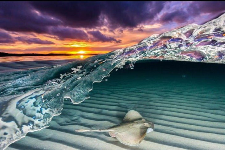 Nature Photos A stingray diving under a wave