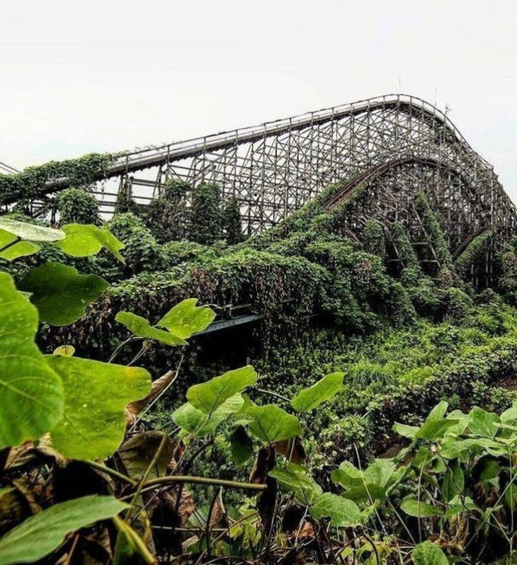 Nature Photos roller coaster