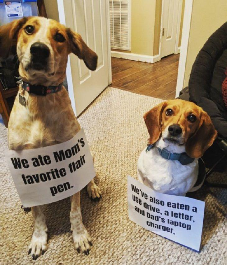 Pet Hall of Shame couple