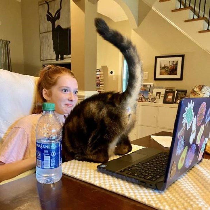 Kids' E-Learning Fails cat