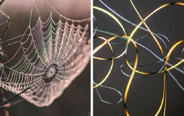Microscope Pics, Spider web