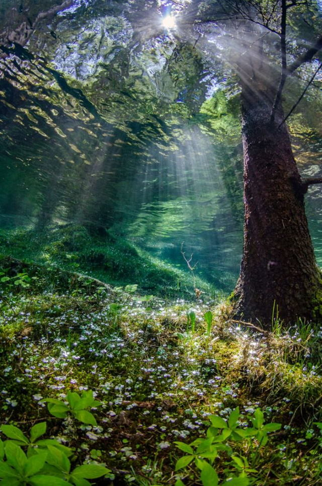 2020 Through Your Lens Underwater Photo Contest Winners Honorable Mention:Martin Strmiska, Styria, Austria