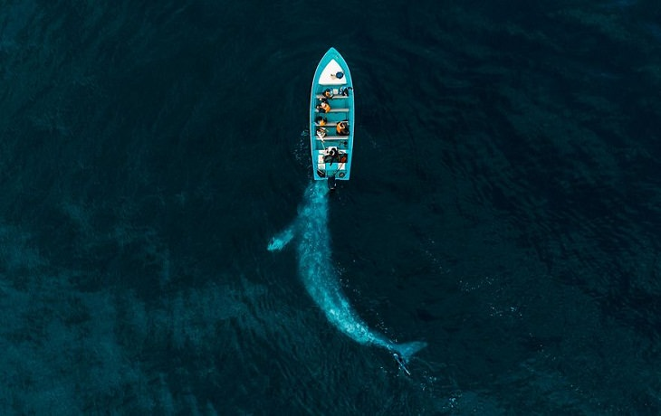 Drone Photos, Gray Whale