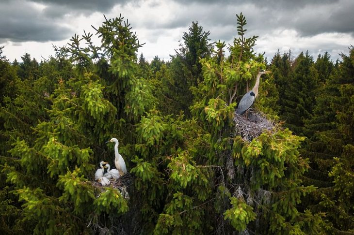Drone Photos, herons