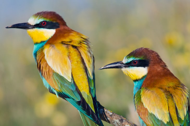 Study Finds Birds Might Be Self Conscious