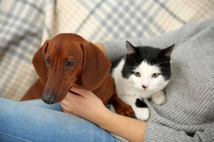 Online pet scams surge during pandemic, owner with cat and dog