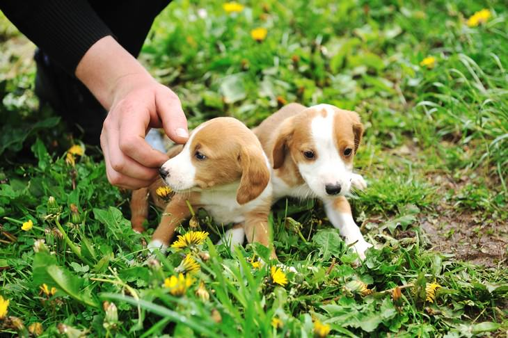 Online pet scams surge during pandemic, puppies