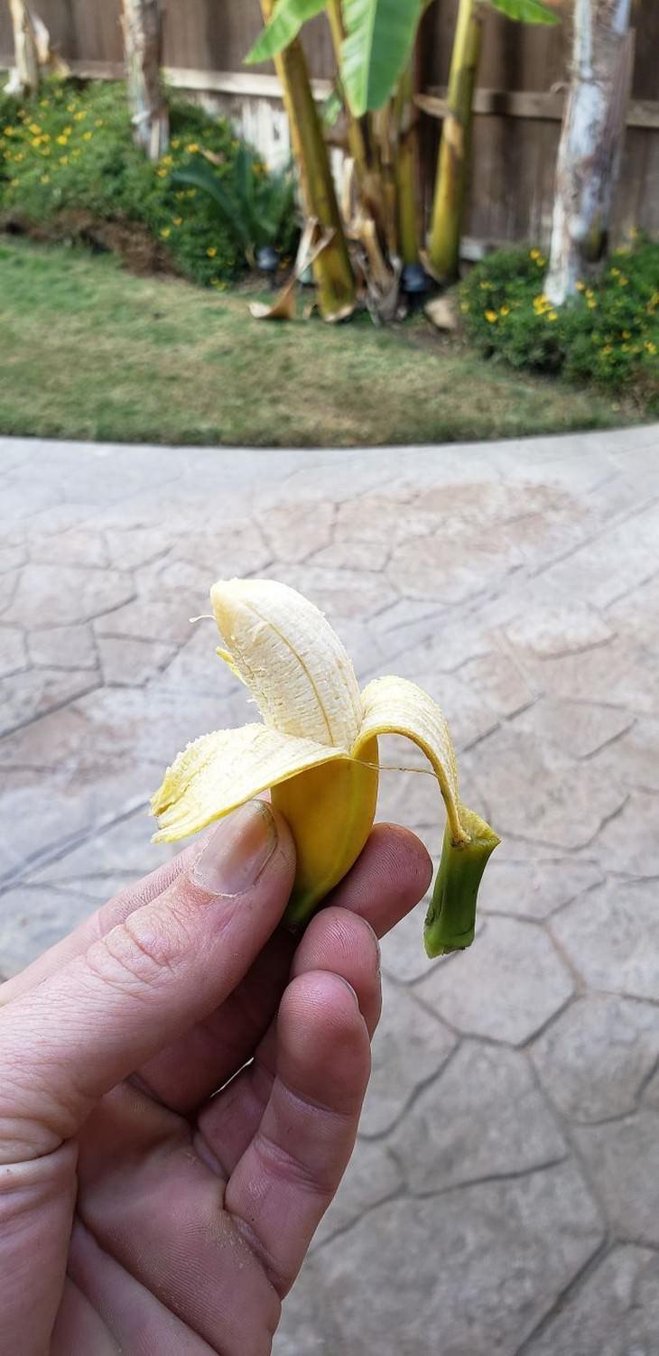 Gardening and harvest fails, banana