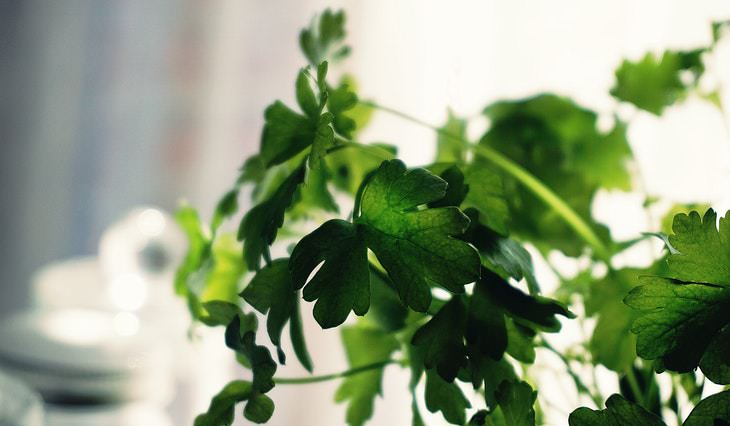 Foods That Can Freshen Up Your Breath Parsley