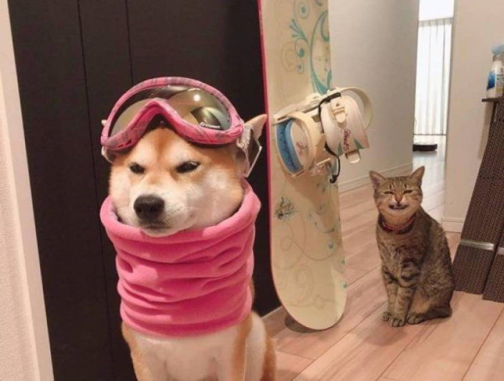 funny animal pictures dog cat
