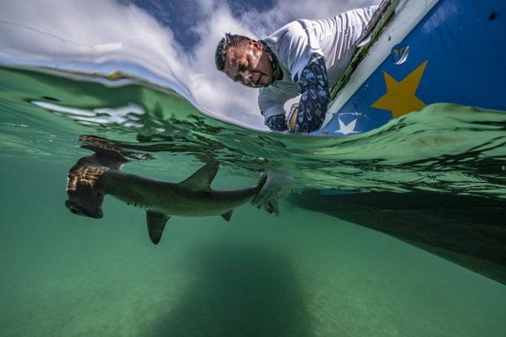 """15 Asombrosas Imágenes Del Concurso De Fotografía Submarina  """"Lo mejor del espectáculo"""", Conservación, (1er lugar) de Edwar Herreno."""