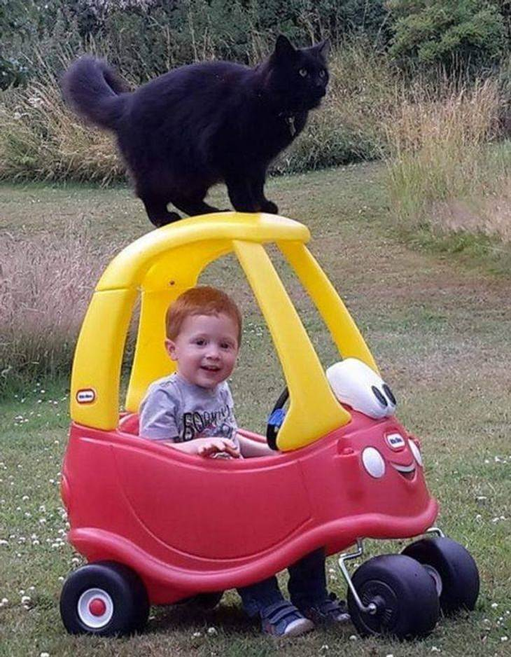 Kids and Pets, cat and kid