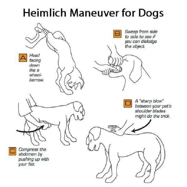 Cool Guides, Heimlich Maneuver