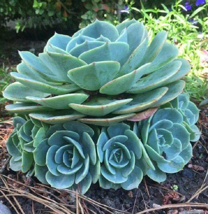 Nature is Amazing, succulents