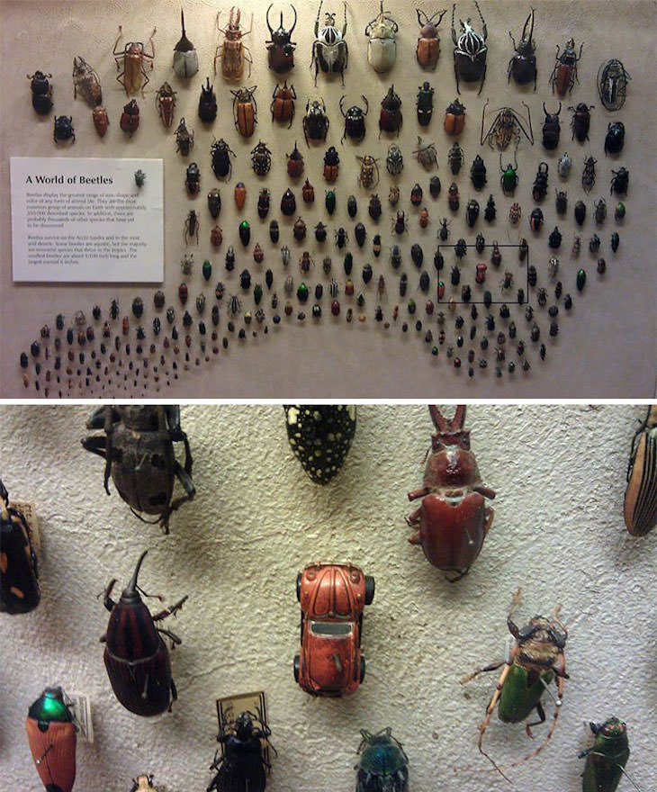 Cool Hidden Details Found in Everyday Objects beetle