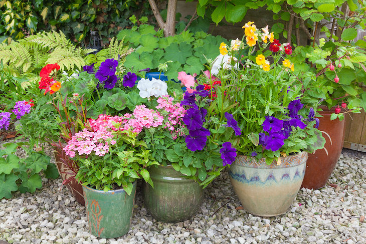 Gardening myths debunked, pots