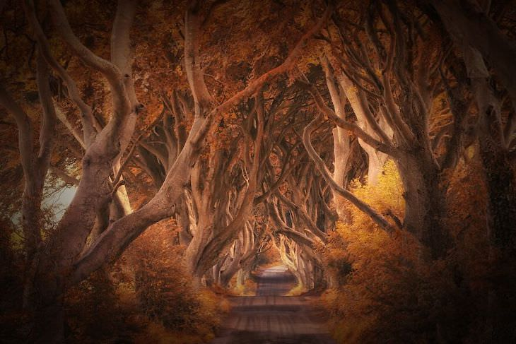 International Photography Awards 2020: Best Nature Photos, The Dark Hedges by Judith Kuhn