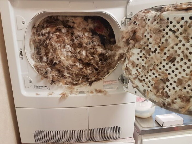 electronics and tech fails pillow in dryer