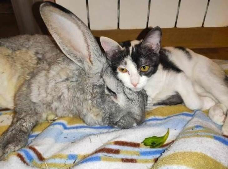 15 Unusually Large Pets, bunny and cat