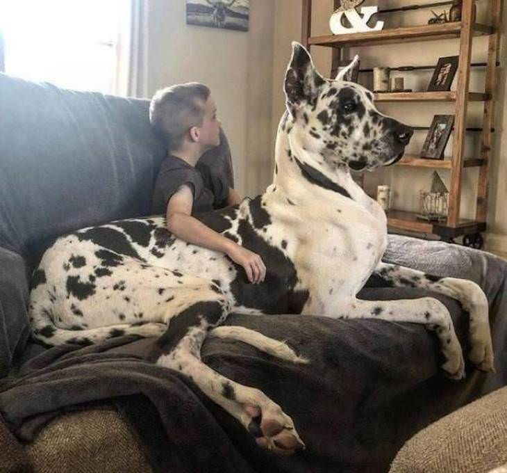 15 Unusually Large Pets, great dane