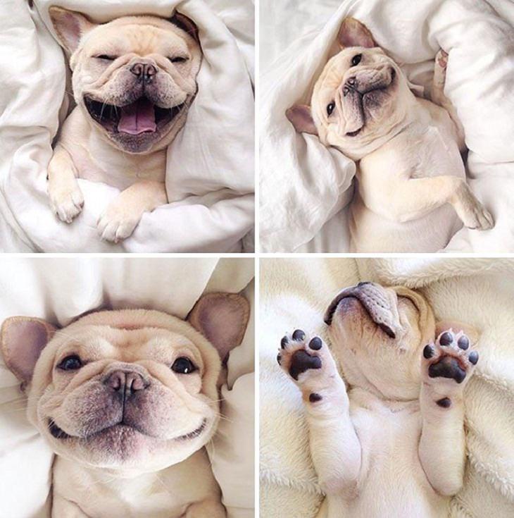 Cute Bulldogs Pics, moods