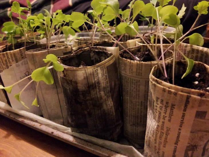 Newspapers Uses seedling pots