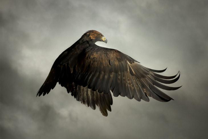 Birds of Prey Photographed Mid-Flight