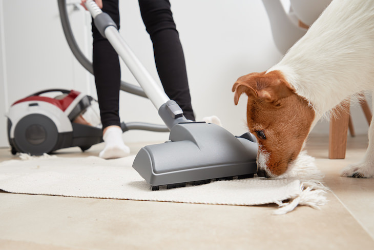 How to Eliminate Your Dog's Fear of the Vacuum, dog snuffs vacuum