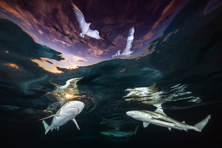 """2021 Underwater Photographer of the Year """"Shark's Skylight"""" by Renee Capozzola"""
