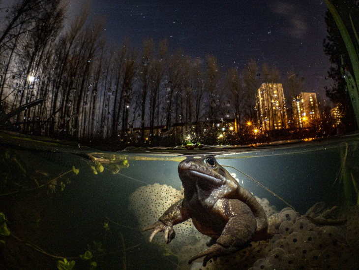 """2021 Underwater Photographer of the Year """"While you sleep"""" by Mark Kirkland"""
