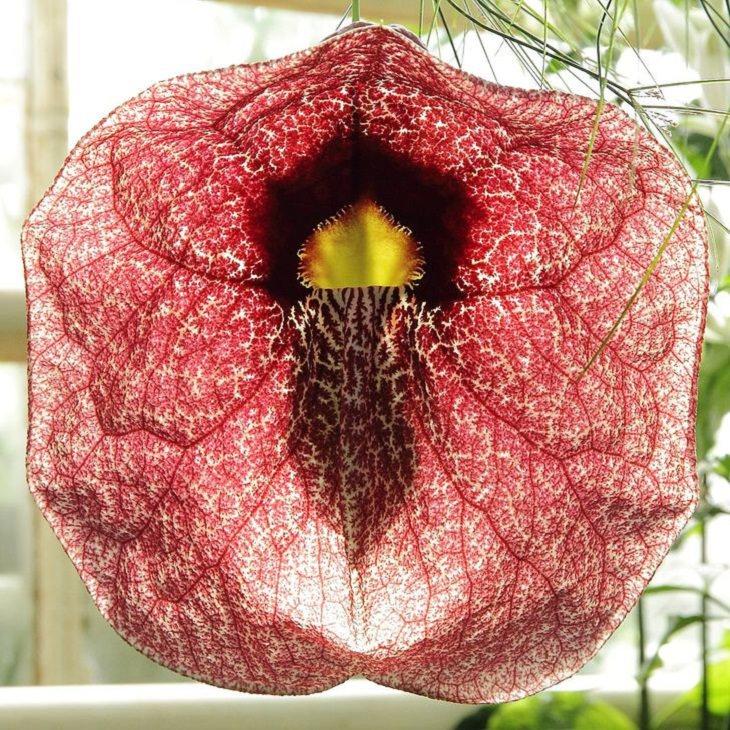 Unique Plants, flower.