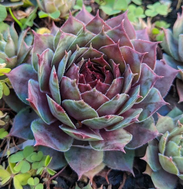 Unique Plants, succulent
